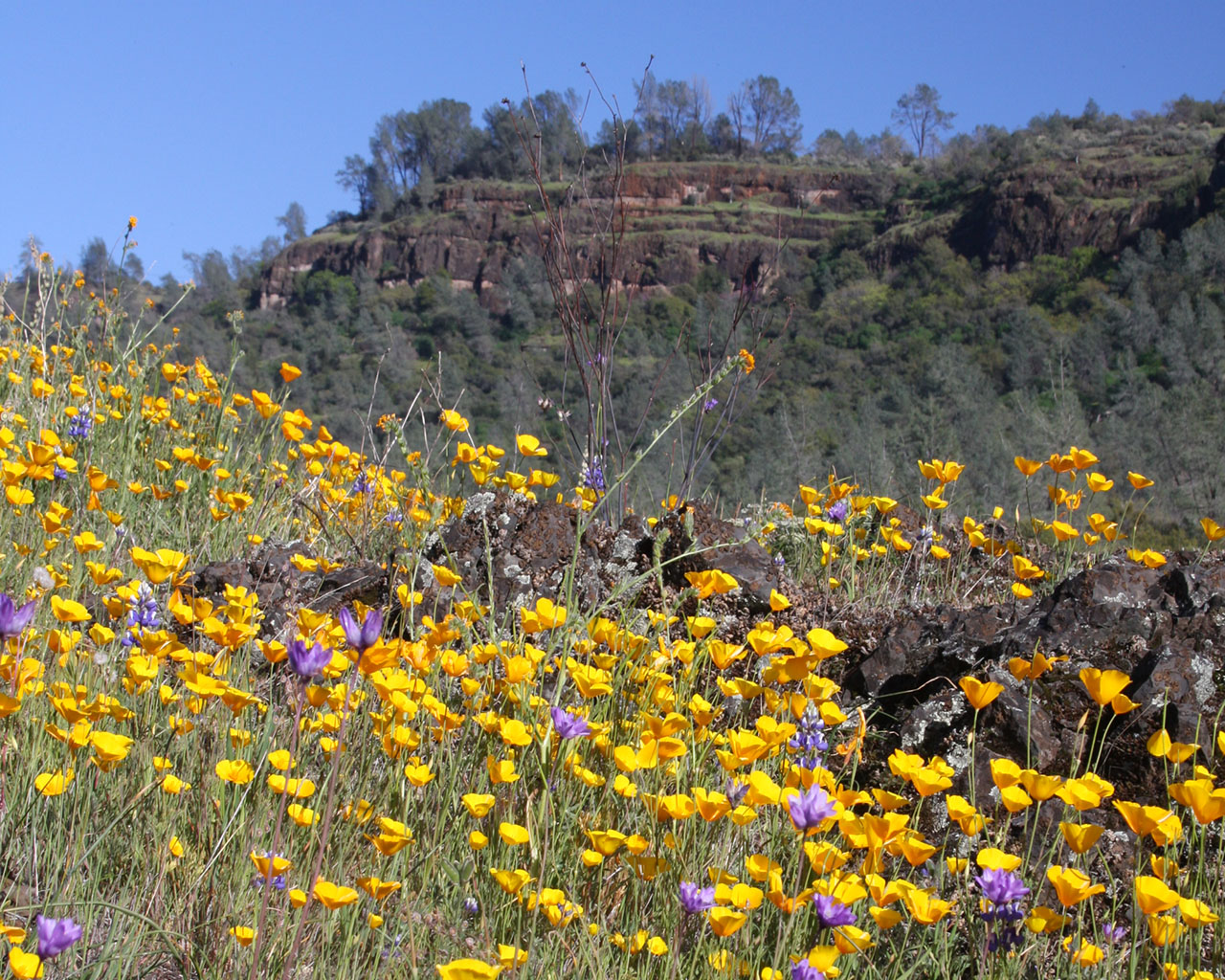 Wildflowers on a mountain side